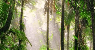 Cinq documentaires sur la planète et l'écologie