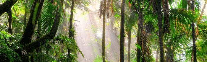 5 documentaires sur la planète et l'écologie
