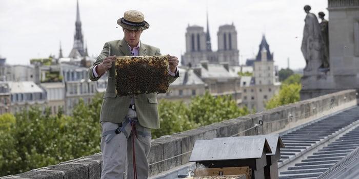 Recyclage en entreprise - Du miel au bureau