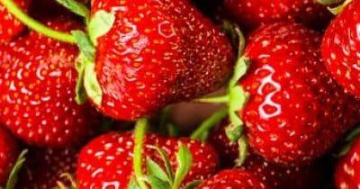 Agriculture urbaine : des fraises en conteneur !