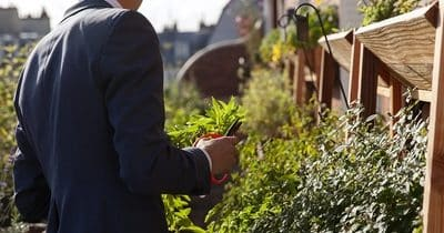 Jardiner pendant votre pause déjeuner avec les potagers