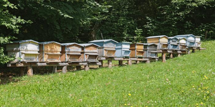 Recyclage entreprise abeille toit bureau 2