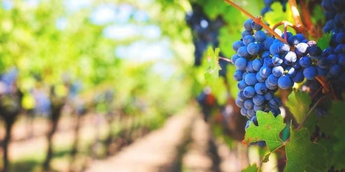 Idées vertes - Recyclage déchets de bouteilles de vin marc de raisin en essence