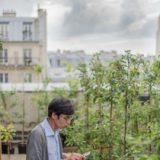 La végétalisation progressive de Paris, la capitale se met au vert !