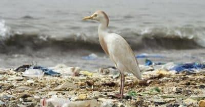 Le tour du monde de la lutte contre les déchets en plastique. Le mouvement est en marche !