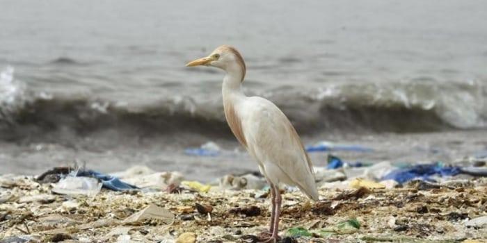 Idée Verte - lutte contre le plastique, zéro déchet (dans)