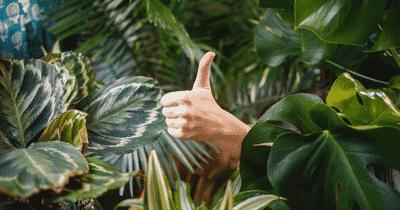 La verdure au bureau pour apporter bien-être et créativité aux employés. Vive le vert !