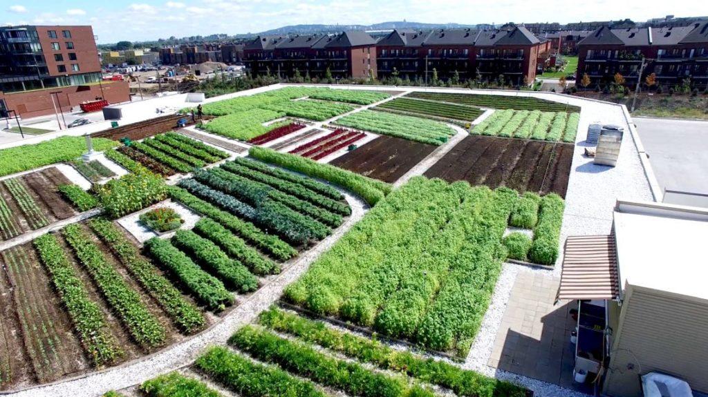 Qu'est-ce que l'agriculture urbaine ?